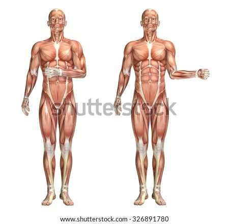 3D render of a medical figure showing shoulder internal and external rotation