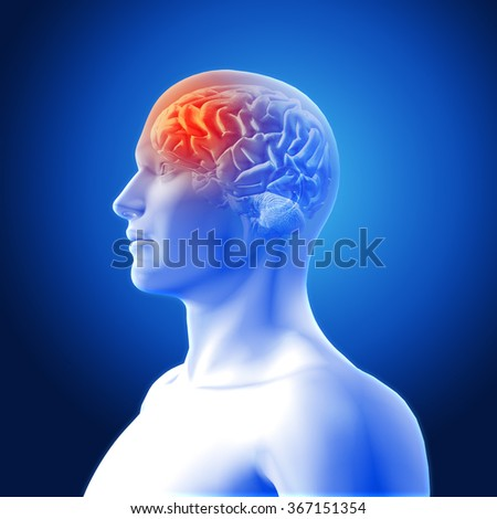 3D render of a medical image showing brain in male figure with frontal lobe highlighted - stock photo