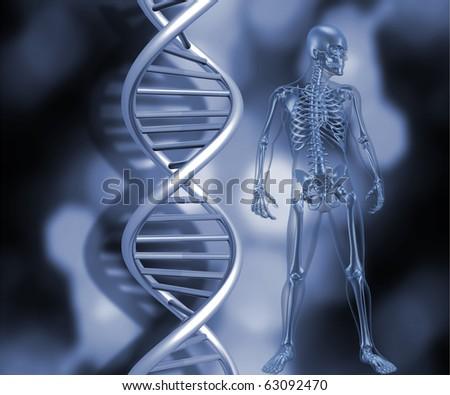 3D render of a medical skeleton stood next to DNA strands - stock photo