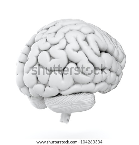 3d render of brain on white background - stock photo