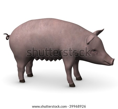 3d render of female pig