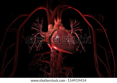 3D render of human circulatory system showing heart and major blood vessels in thorax on black background - stock photo