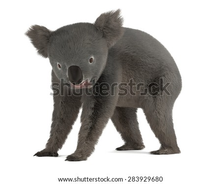 3d render of koala bear