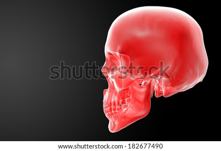 3d render red skull on black background - side view - stock photo
