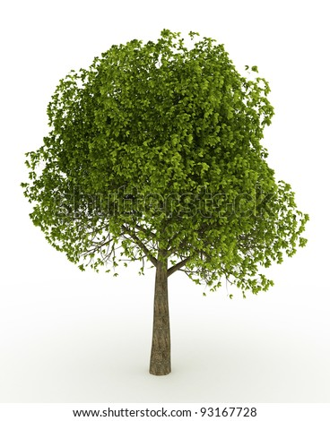 3d render  tree isolated over white - stock photo