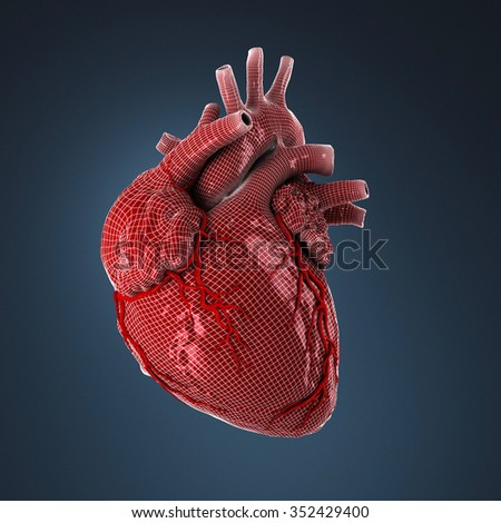 3d rendered human heart. - stock photo