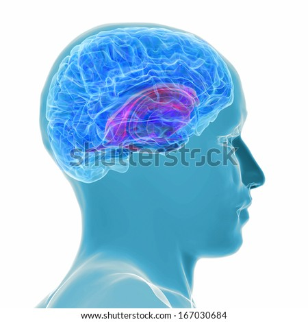 3d rendered illustration - active brain - stock photo