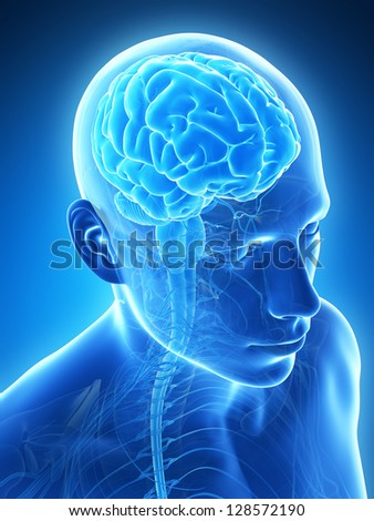 3d rendered illustration - male brain