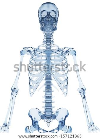 3 D Rendered Illustration Glass Skeleton Stockillustration 157121363 ...