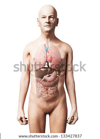 3d rendered illustration of an old man - organs