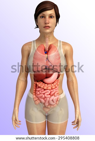 3d rendered illustration of female digestive system