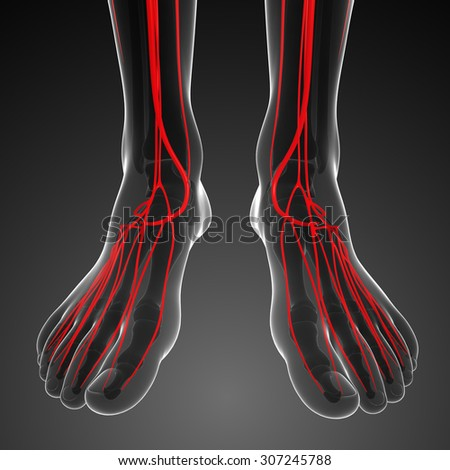 3d rendered illustration of human arterial system