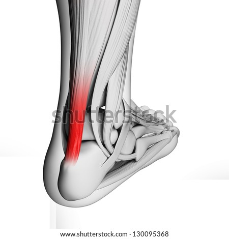 3d rendered illustration of the achilles tendon - stock photo