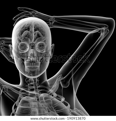 3d rendered illustration of the female anatomy - front view - stock photo