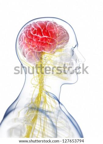 3d rendered illustration of the head - headache - stock photo