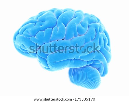 3d rendered illustration of the human brain anatomy