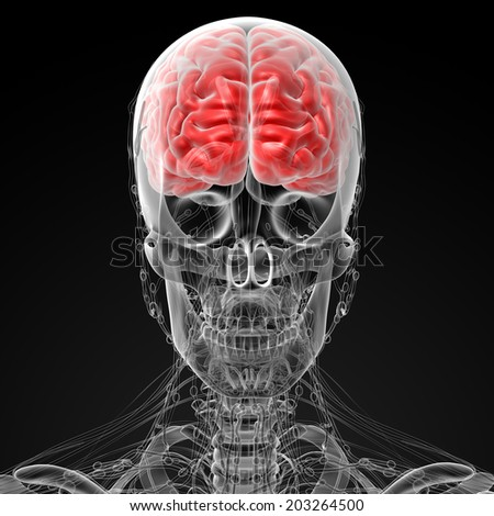3d rendered illustration of the male brain - stock photo