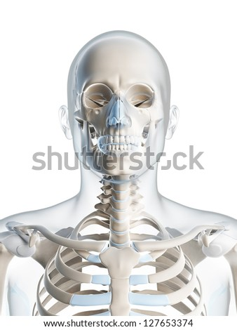 3d rendered illustration of the male skeleton - stock photo