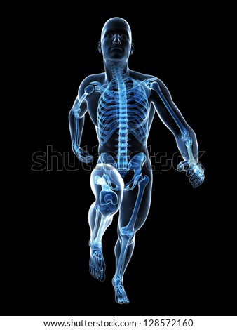3d rendered illustration - runner anatomy