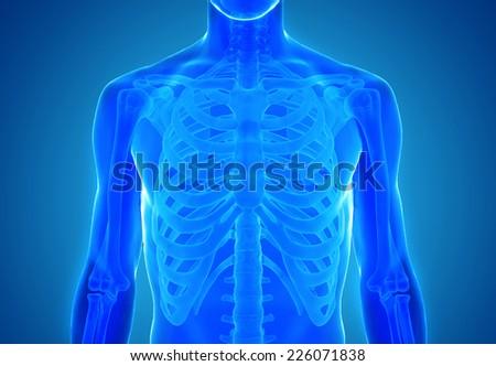 3d rendered illustration - skeleton - stock photo