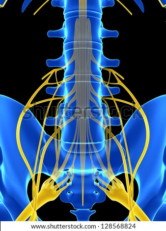 3d rendered illustration - spinal cord - stock photo