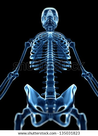 3d rendered medical illustration - x-ray style skeleton