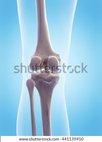 3d rendered, medically accurate 3d illustration of the human knee - stock photo