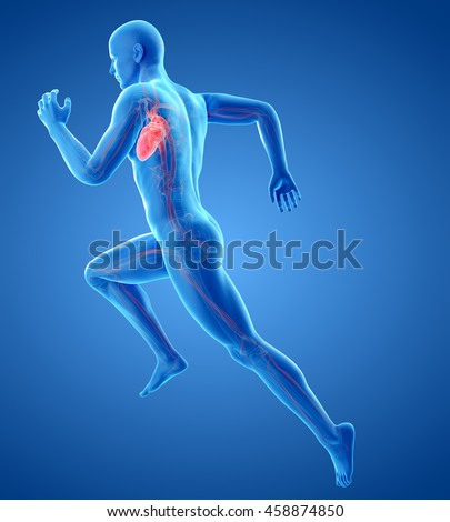 3d rendered medically accurate illustration of a runners heart - stock photo