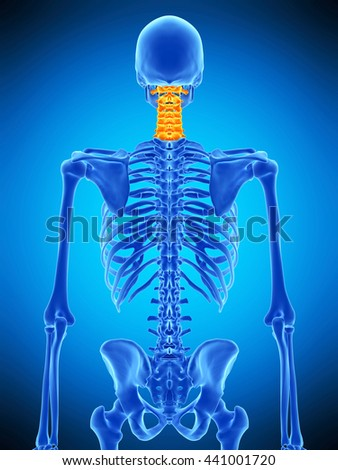 3d rendered, medically accurate illustration of the cervical spine - stock photo
