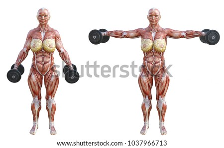 3 D Rendering Anatomical Muscles Shape Woman Stock Illustration