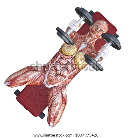 3d rendering bench dumbbell exercise for chest with an anatomical muscles shape woman isolated on white.
