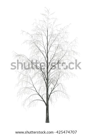 3D rendering of a birch tree in winter isolated on white background