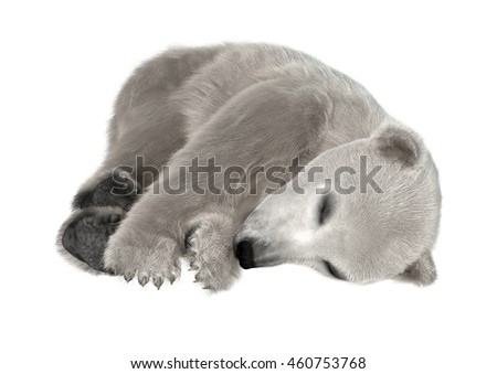 3D rendering of a polar bear cub isolated on white background