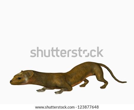 3D rendering of a slinky weasel - stock photo
