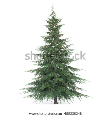 3D rendering of Fir tree isolated