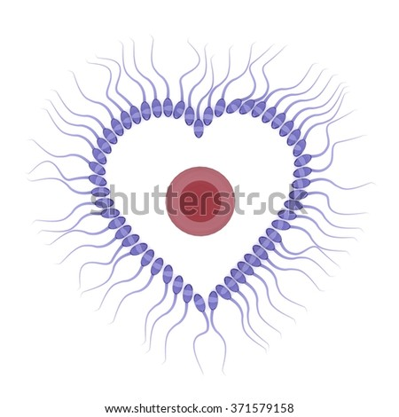 3d rendering of sperm with egg isolated on white background, valentine concept  - stock photo