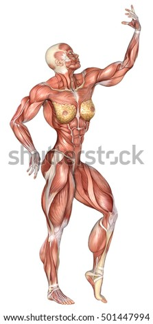 3d rendering strong flayed woman with bodybuilder pose isolated on white