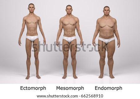 endomorph stock images royalty free images amp vectors