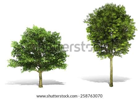 3d tree render on white background - stock photo