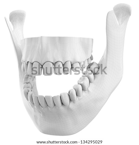Diagram of jawbone introduction to electrical wiring diagrams outstanding human jaw bone mold anatomy and physiology biology rh stockmarketresources info human jawbone diagram of human jawbone ccuart Images