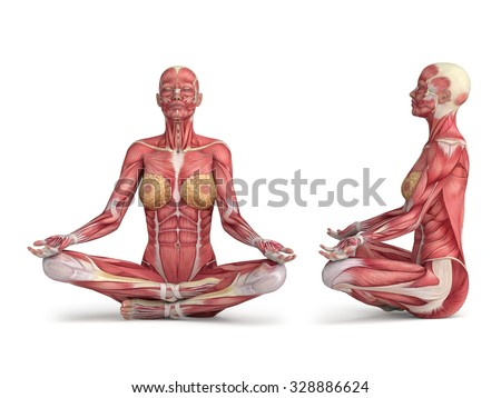 3d woman muscular anatomy - meditating position - stock photo