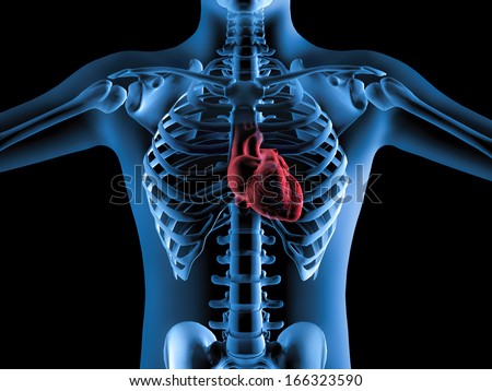 3D X-Ray image of human body and heart anatomy - stock photo