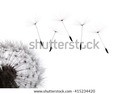 ?Dandelion on White background.