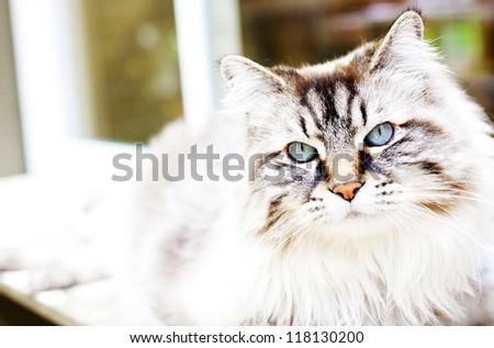 Darling big cat - stock photo