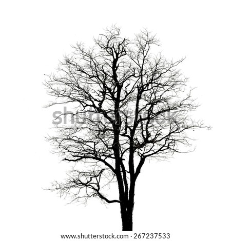 Dead tree silhouette. dry tree without leafs isolated.