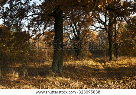 deciduous trees in the autumn season. Forest (Park)