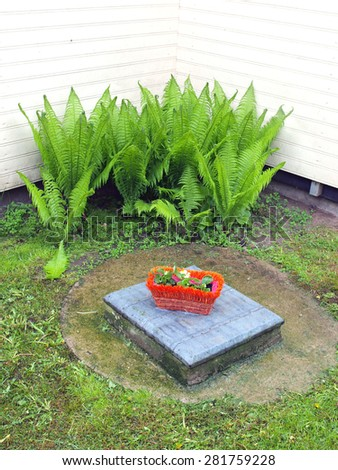 Decorative flower box on sewer  hatch and ferns growing in wall corner     - stock photo