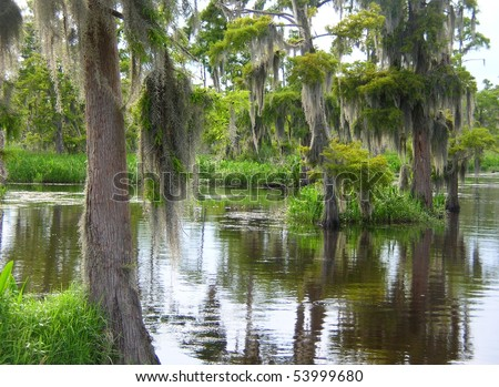 Deep Bayou Country - stock photo