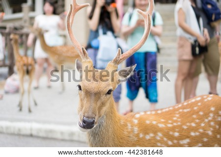 Deer looking you for something. - stock photo