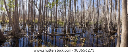 180 degree panorama of the Okefenokee swamp in early morning